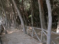 La pineta di Porto Sant'Elpidio