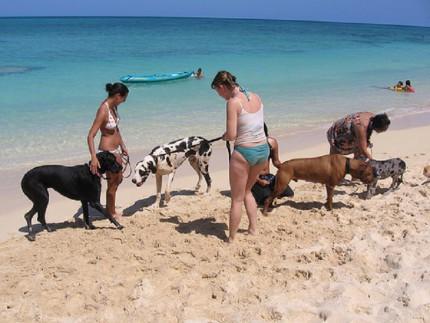 spiaggia-cani