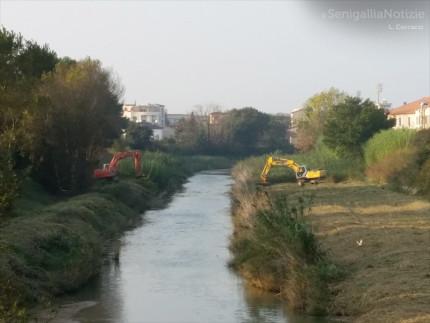 Le ruspe sul fiume Misa di Senigallia per gli interventi di manutenzioen idraulica e messa in sicurezza