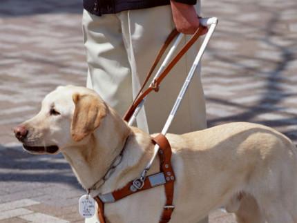 Cane guida per ciechi ed ipovedenti