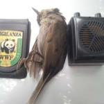Operazione antibracconaggio a Senigallia