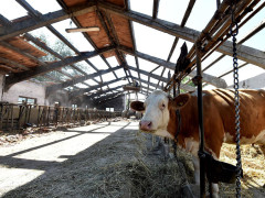 Allevamenti nelle zone colpite dal terremoto del 30 ottobre nelle Marche. Foto tratta dal sito Vita.it