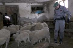 I Carabinieri Forestali sono intervenuti ad Acquasanta Terme per soccorrere due greggi di ovini bloccati da giorni nelle stalle per la neve caduta nelle Marche