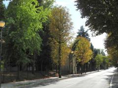 L'alberatura attuale in viale Indipendenza a Macerata