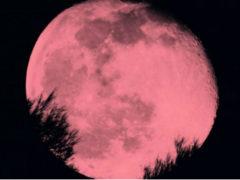 """""""Luna rosa"""""""