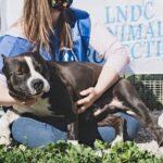 Cane protetto da LNDC - Foto da Facebook.com/legacane